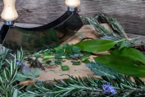 kräuter-pflanze-wurzel-extrakt