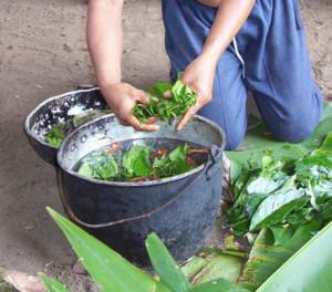 Ayahuasca-Wirkungen-Vorteile-Nebenwirkungen
