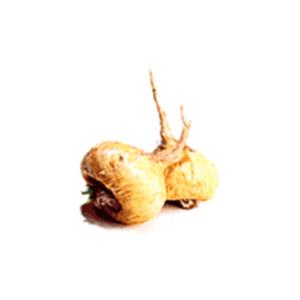 Maca-wurzel-wirkung-vorteile-nachteile-dosis