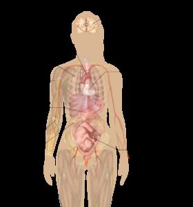 Nikotin-Nicotiana-tabacum-Nebenwirkungen