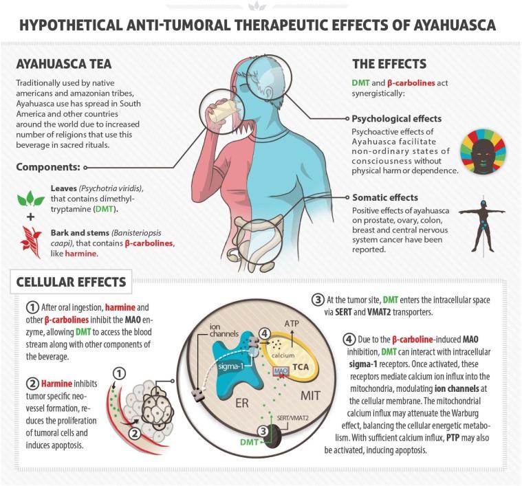 Wie-Ayahuasca-Krebs-bekämpft