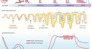 Darm-Mikrobiom-Entwicklung