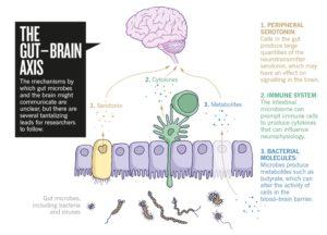 Darm-Mikrobiom-Gehirn-Wirkungen