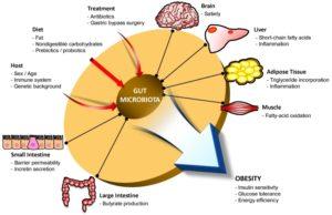 Darm-Mikrobiom-Krankheiten-Wirkungen