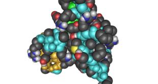 igf-1 Insulin Like Growth Factor wirkungen-vorteile-nachteile