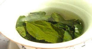 EGCG grüner Tee Wirkung-Vorteile Grüntee Dosis