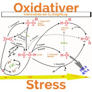 Oxidativer Stress Entstehung-Gefahren-Vorbeugung
