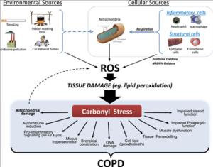 oxidativer stress auswirkungen