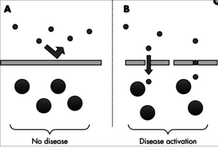 Blut-Hirn-Barriere-Krankheiten
