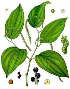 Schwarzer Pfeffer Piperin Vorteile-Nebenwirkungen-Dosis-Studien