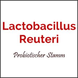 Lactobacillus-reuteri-Vorteile-Wirkungen-Dosis-Autismus-Libido-Gewicht-Cholesterin-Probiotischer-Stamm