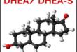 DHEA-S-Dehydroepiandrosteronacetat-Sulfat-Dosis-Wirkungen-Nebenwirkungen-Hormon