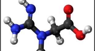 Kreatin-Vorteile-Studien-Nebenwirkung-Dosierung
