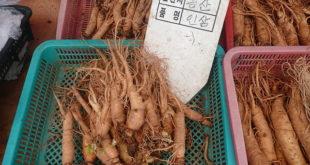 Roter-Ginseng-koreanischer-Ginseng-Vorteile-Nebenwirkungen-Dosis-Gefahren-Arten-Wirkungen-Studien