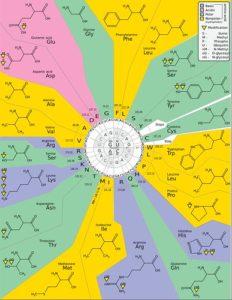 MAP (Master Amino Acid Pattern) - Wirkung-Studien-Vorteile-Zielgruppe