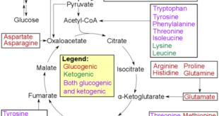 Aminogramm-Vorteile-steigern-aufbauen-Aminosäuren-auffüllen-Vorteile-messen-Referenzwerte