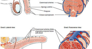 Impotenz-heilen-heilbar-behandeln-Diagnose-Selbsthilfe-Ursachen-Test