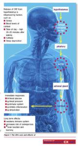 Cortisol-Vorteile-Nebenwirkungen-Dosis-Studien